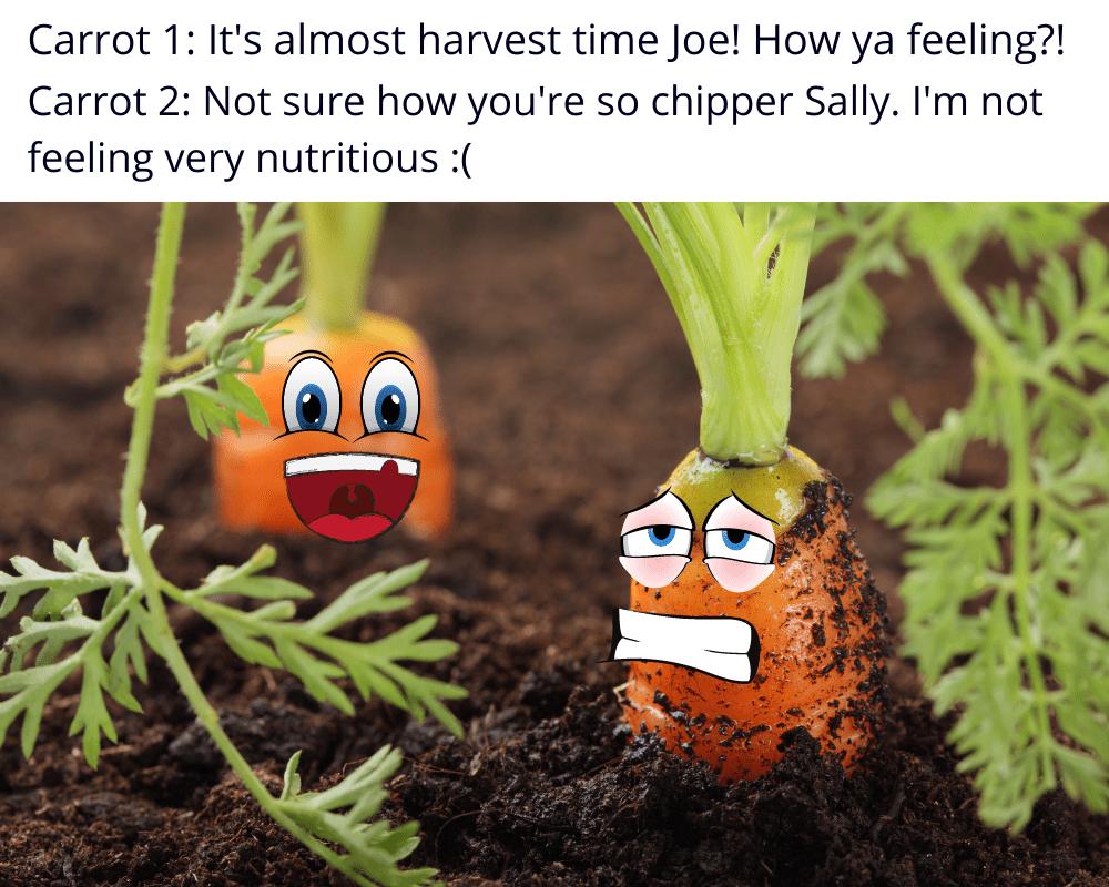 healthy vs unhealhty soil